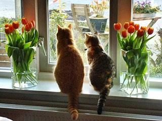 Весенние скидки на окна ПВХ